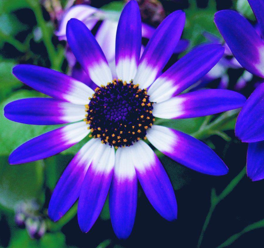 Fleurs et jardins page 9 for Fleurs et jardins